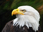 Animals Digital Art - Bald Headed Eagle by James Shepherd