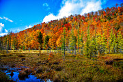 Fir Trees Prints - Bald Mountain Pond V Print by David Patterson