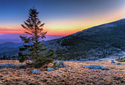 Dan Carmichael - Bald Sunset - Roan...