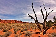Bald Tree At Arches  Print by Benjamin Yeager