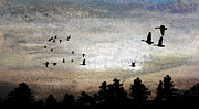 Canadian Geese Pastels - Baleful Sun by R Kyllo