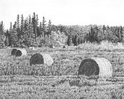 Bales Drawings - Bales on Field by Michelle Moroz-Chymy