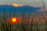 Sea Oats Prints - Ball of Fire Print by Sebastian Musial