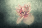Artistic Photo Prints - Ballerina Print by Constance Fein Harding