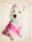 Westies Prints - Ballerina Dog Print by Edward Fielding