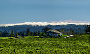 Sonoma County Vineyards. Prints - Balletto Fog blanket Print by Stan Angel