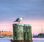 Inner Harbor Photos - Baltimore City Purple Sunset by JC Findley