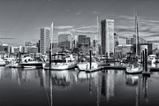 Patapsco River Photos - Baltimore Inner Harbor Skyline IV by Clarence Holmes
