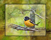 Oriole Digital Art Posters - Baltimore Oriole Poster by Diane Hagler