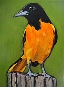 Oriole Originals - Baltimore Oriole by Edith Hunsberger