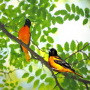 Oriole Digital Art Posters - Baltimore Orioles in Spring Poster by Magna Carta