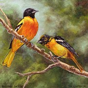Baltimore Orioles Framed Prints - Baltimore Orioles Framed Print by Tom  Chapman