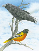 Oriole Drawings Metal Prints - Baltimore Metal Print by Paul Treadway