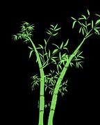 Cheryl Young - Bamboo 3