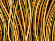 Tree Lines Digital Art Prints - Bamboo Canes Print by Brenda Bryant