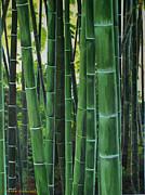 Bamboo Print by Chikako Hashimoto Lichnowsky
