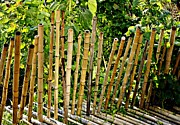 Bamboo Fence Prints - Bamboo Fencing Print by Lilliana Mendez