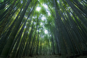 Japan Framed Prints - Bamboo Forest Framed Print by Aaron S Bedell