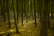 South Korea Prints - Bamboo Forest Print by Mark Eaton