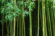 Bob Christopher Travel Photographer Posters - Bamboo Forest Maui Poster by Bob Christopher