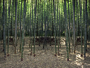 Bamboo Forest Framed Prints - BAMBOO FOREST of KYOTO JAPAN Framed Print by Daniel Hagerman