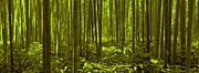 Bamboo Posters - Bamboo Forest Twilight  Poster by David Dehner