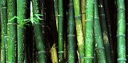 Kelly Photo Prints - Bamboo Graffiti Pano - Sichuan Province Print by Anna Lisa Yoder