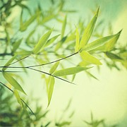 Lime Photo Prints - Bamboo In The Sun Print by Priska Wettstein