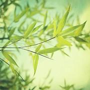 Bamboo In The Sun Print by Priska Wettstein