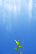 William Voon Metal Prints - Bamboo Leaves Against Sunny Blue Sky Metal Print by William Voon