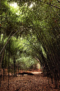 Bamboo Forest Framed Prints - Bamboo Path Framed Print by John Rizzuto