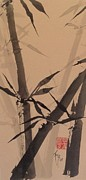 E Black Drawings Prints - Bamboo Study #1 on Tagboard Print by Robin Miller-Bookhout