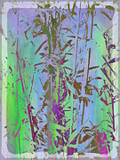 Violet Blue Art - Bamboo Study 1 by Tim Allen