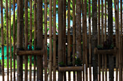 Bamboo Fence Art - Bamboo View by Georgia Fowler