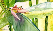 Banana Flower Framed Prints - Banana Bloom Framed Print by Lyse Anthony