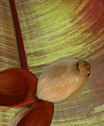 Abstract Nature Photography - Banana Composition I by Ben and Raisa Gertsberg
