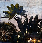 Bronze Wire Prints - Banana Palms Print by Gilbert Artiaga