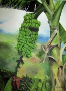 Tropical Fruits Prints - Banana Tree Print by Kenneth Harris