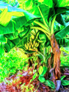 Hana Paintings - Bananas in Lahaina by Dominic Piperata