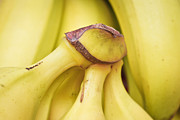 Yellow Bananas Prints - Bananas Print by Tom Gowanlock