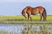 Wild Horse Prints - Banker Horse on the Tidal Flats Print by Bob Decker