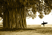 Ala Moana Metal Prints - Banyan surfer Metal Print by Sean Davey
