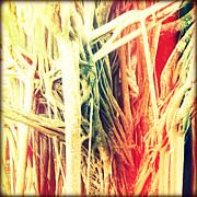 Banyan Tree Print by Chris Andruskiewicz