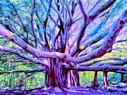 Dominic Piperata - Banyan Tree Lahaina Maui