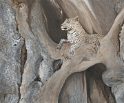 Baobab Paintings - Baobab Perch by Jini Patel Thompson - JPT