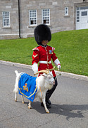 Quebec Metal Prints - Baptiste the Goat Metal Print by Edward Fielding