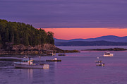 Porcupine Fish Art - Bar Harbor Sunrise by Cynthia Farr-Weinfeld