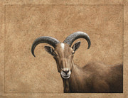 James W Johnson Drawings Prints - Barbary Ram Print by James W Johnson
