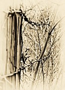 Barbed Wire Fences Framed Prints - Barbed Framed Print by Greg Jackson