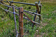 Grate Photos - Barbed Wire Along the Fence by Janice Rae Pariza